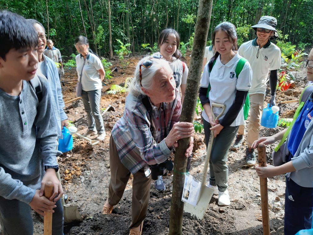 Jane Goodall plants tree in Singapore 2019