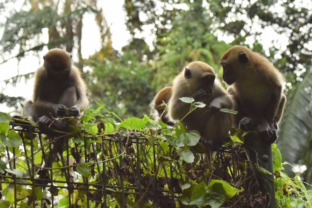 Monkeys-WindsorPark