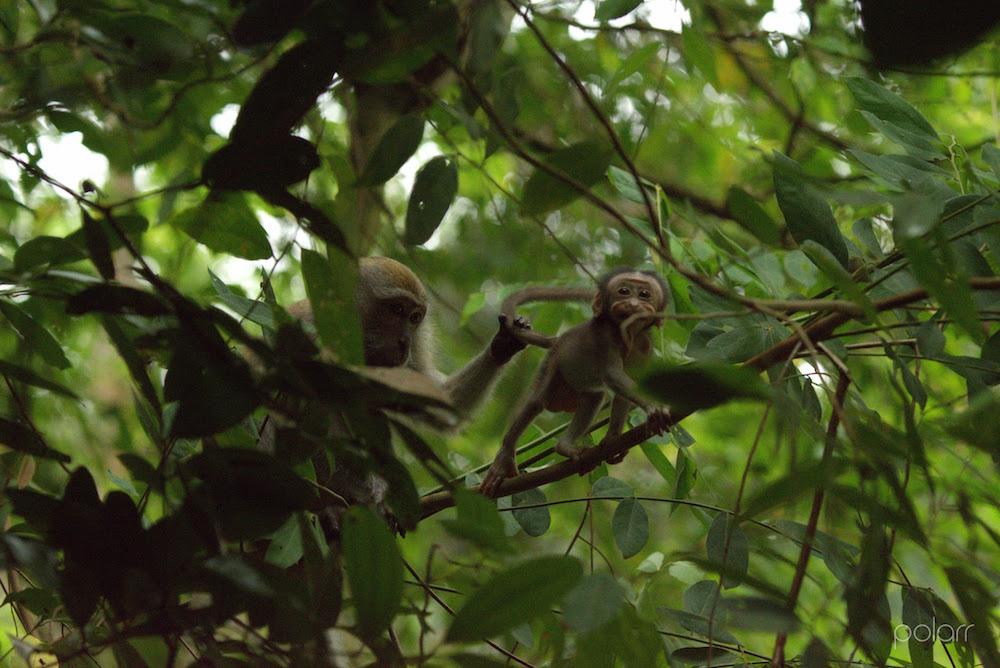 Baby Monkey Windsor Park