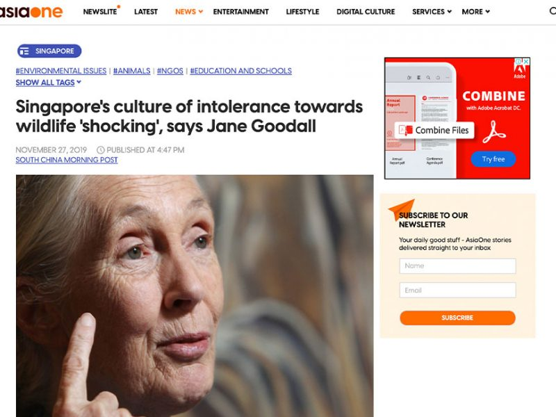 Singapore's culture of intolerance towards wildlife 'shocking', says Jane Goodall