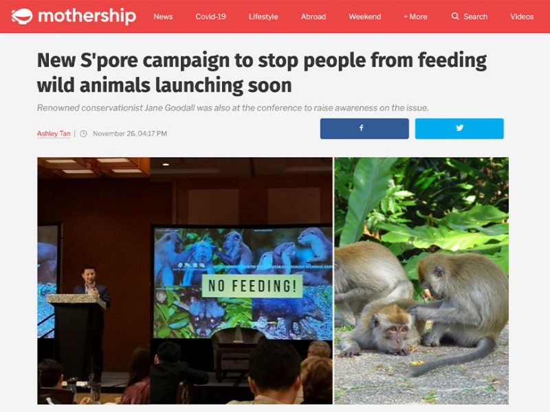 New S'pore campaign to stop people from feeding wild animals launching soon