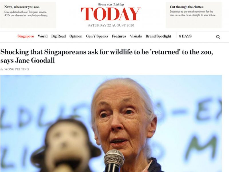 Shocking that Singaporeans ask for wildlife to be 'returned' to the zoo, says Jane Goodall Read more at https://www.todayonline.com/singapore/shocking-that-singaporeans-ask-wildlife-be-returned-zoo-says-jane-goodall